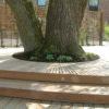 Terrasse en bois grande arbre escalier brun Wavre